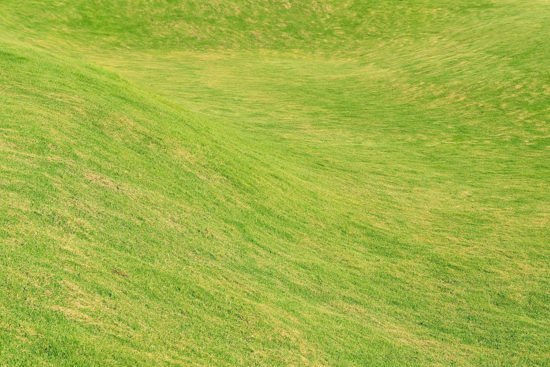sfondo verde erba foto