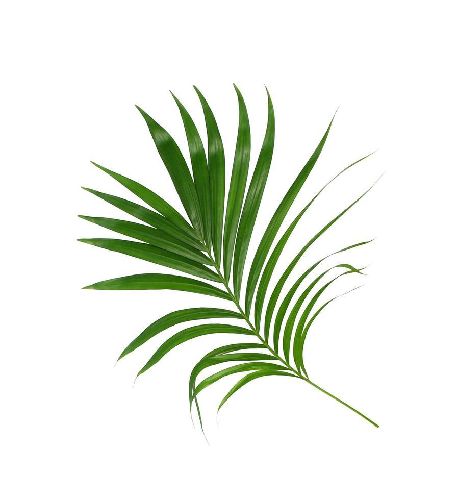 fogliame tropicale verde foto