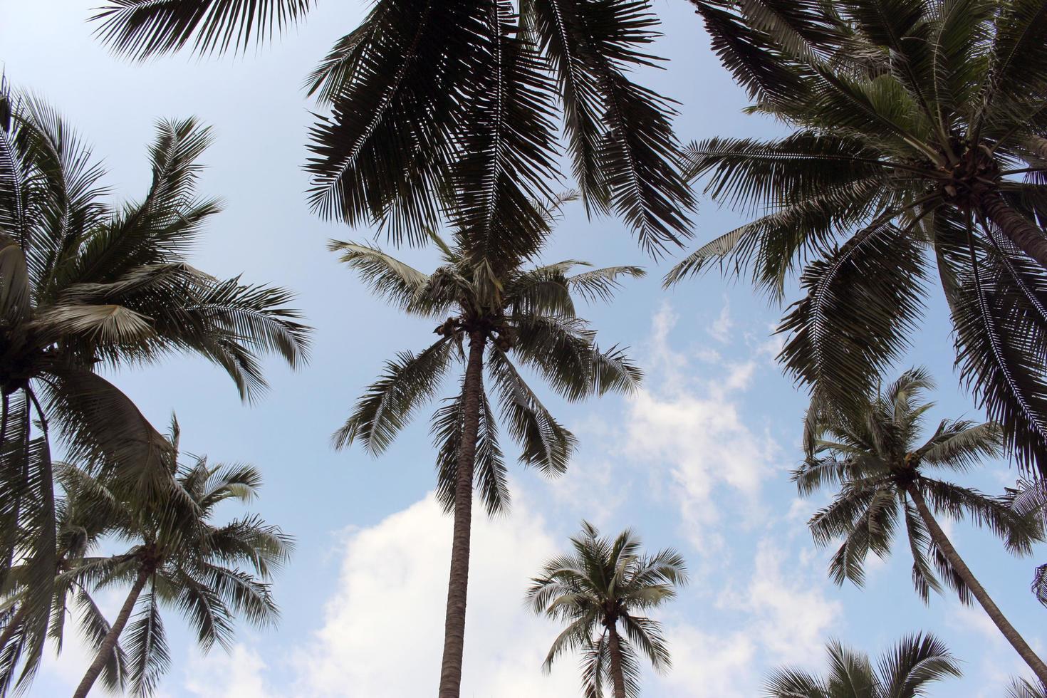 gruppo di palme foto