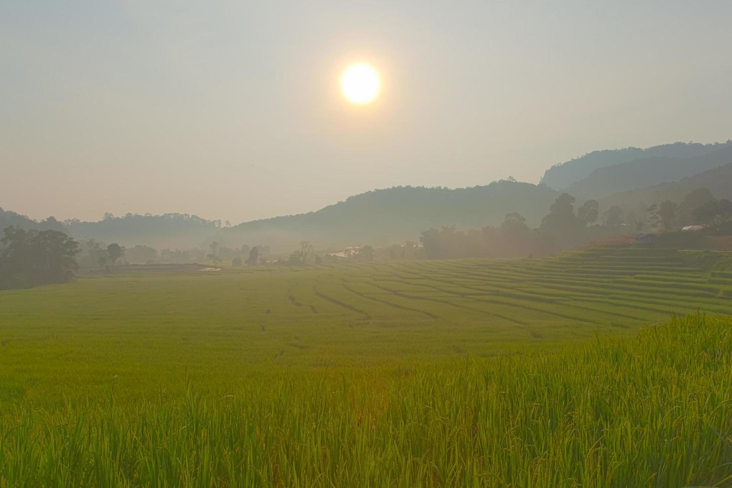 campo di riso sulla collina foto