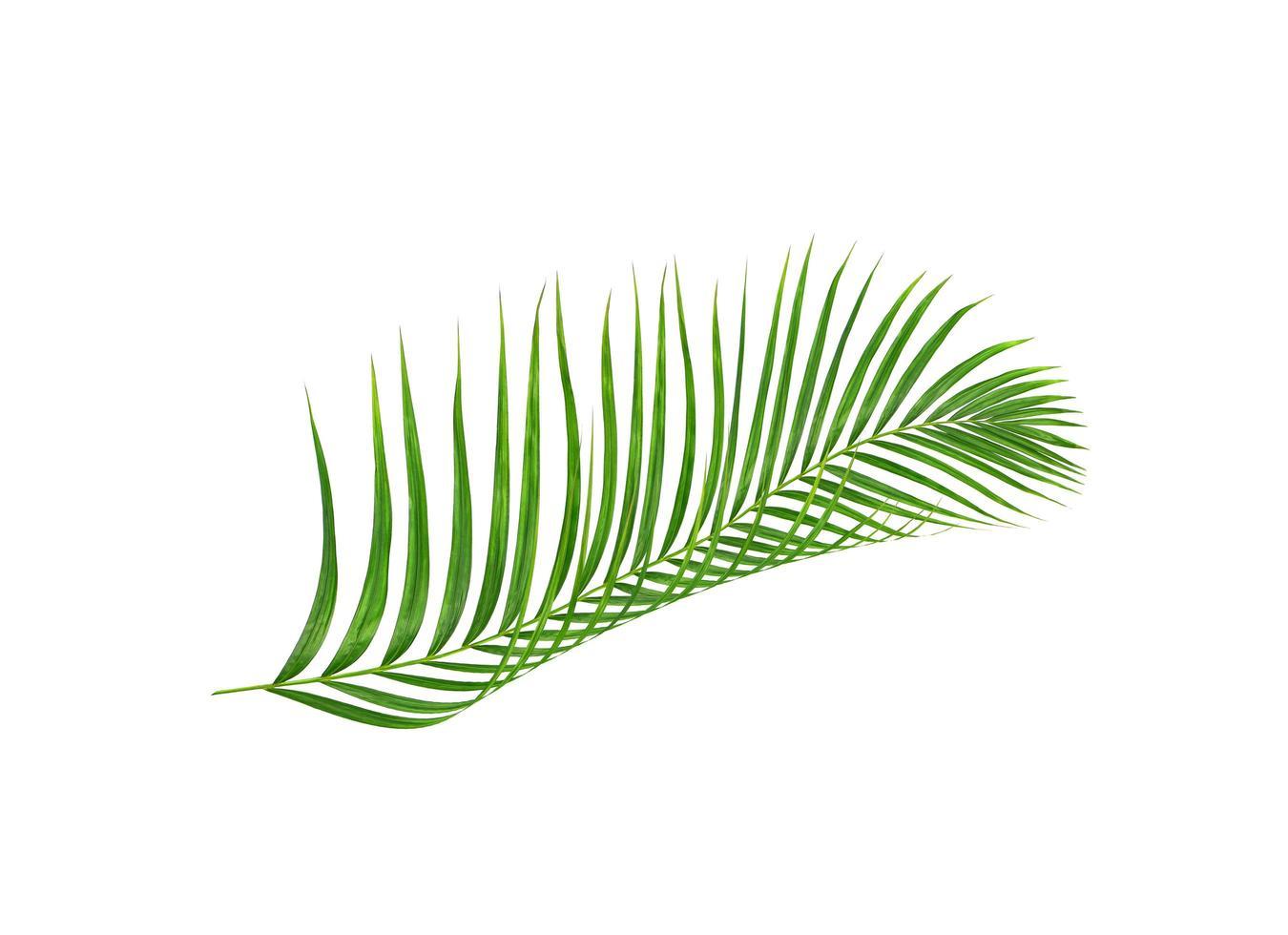 foglie verdi di palma foto