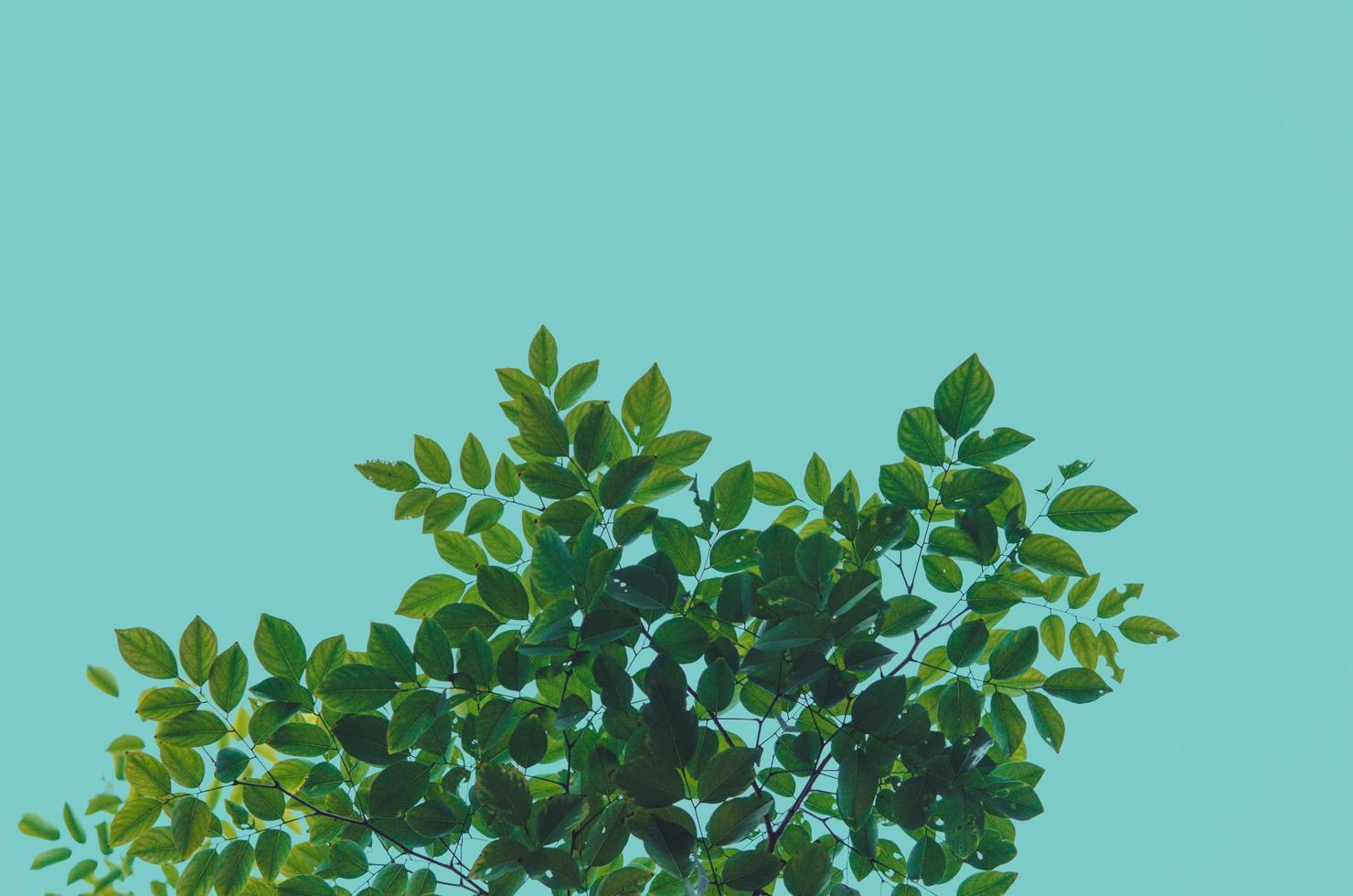 foglie verdi su sfondo blu foto