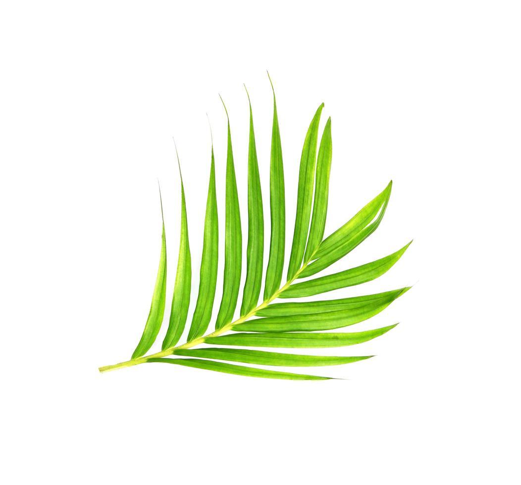 ramo di palma verde brillante foto