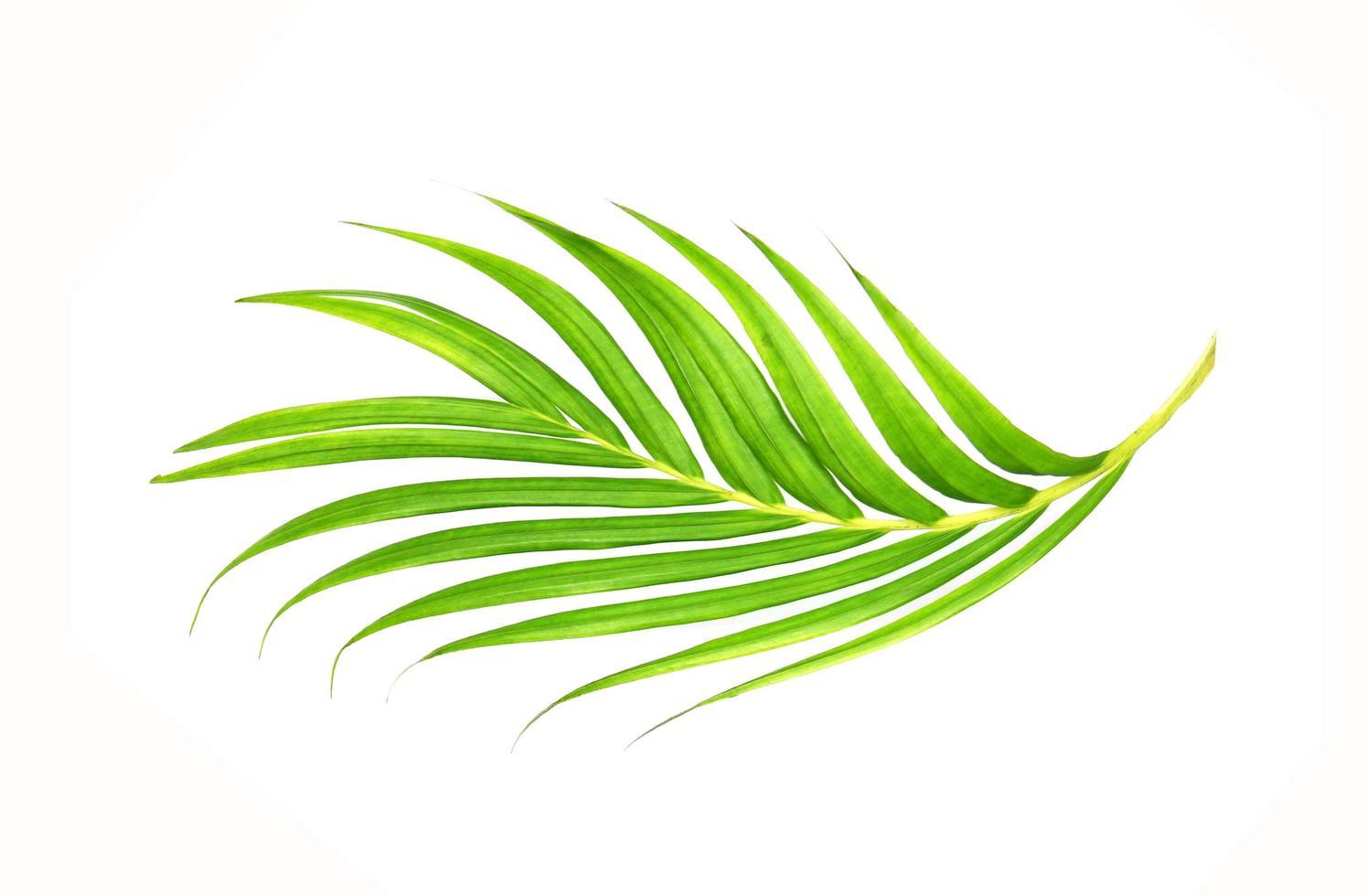 vibrante foglia verde brillante foto
