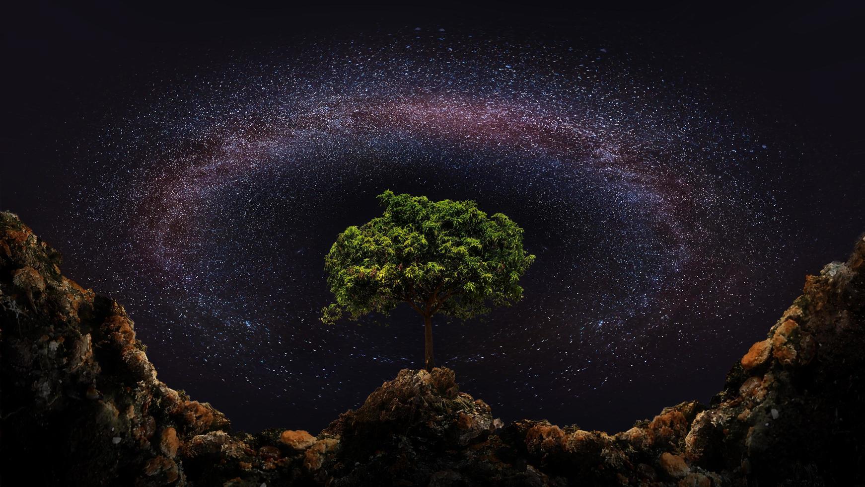 albero e via lattea foto