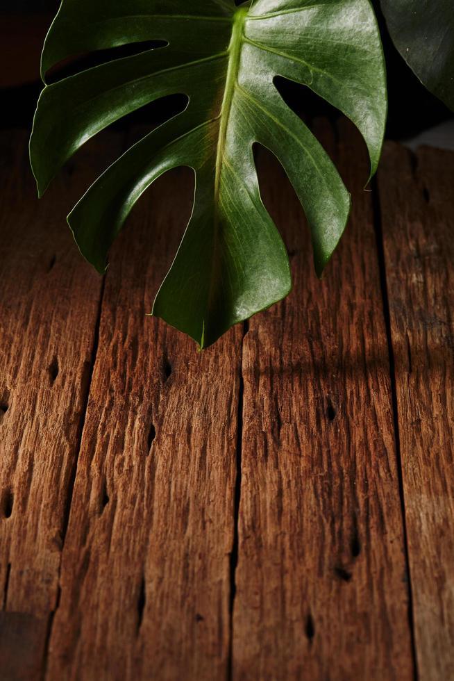 foglia di monstera su legno foto