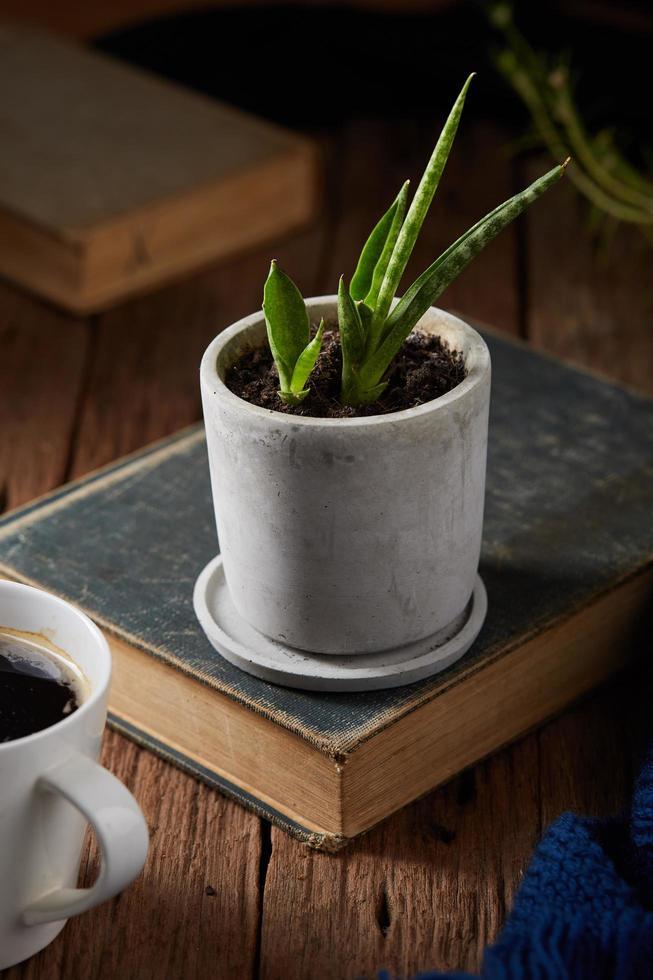 pianta in vaso sul libro foto