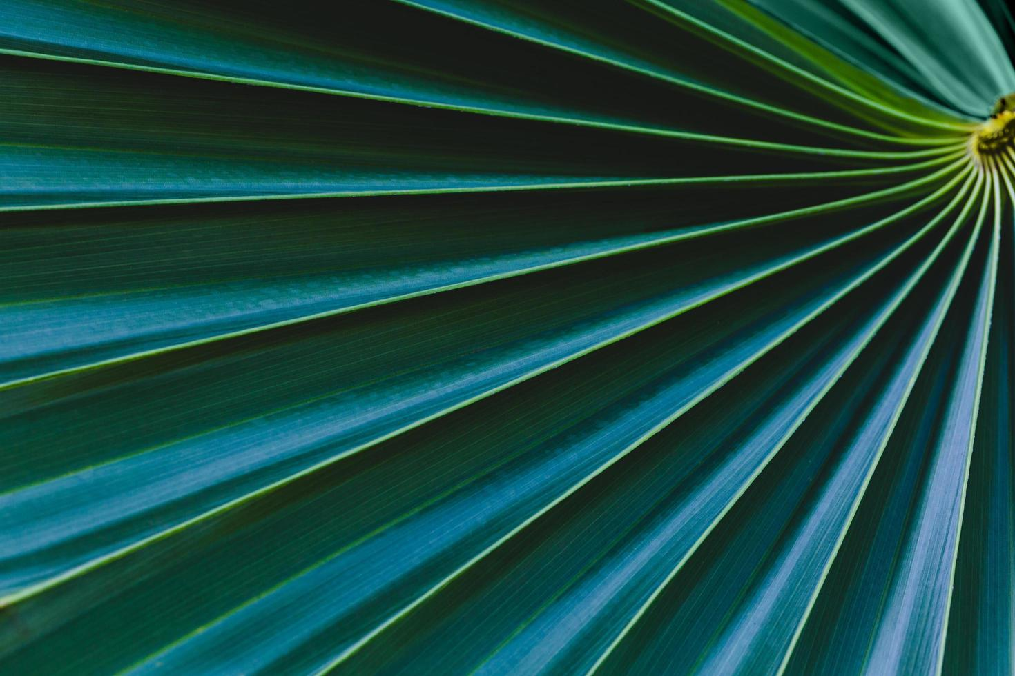 sfondo foglia tropicale foto