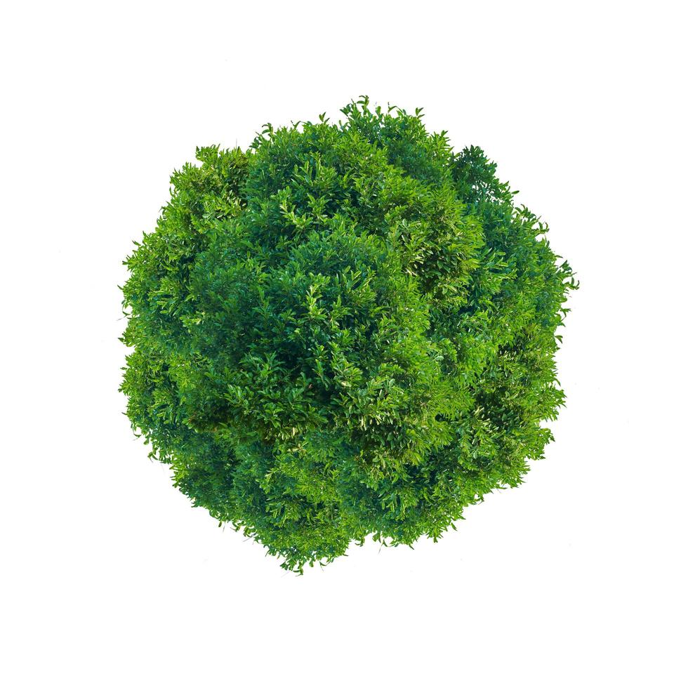 cerchio albero verde foto