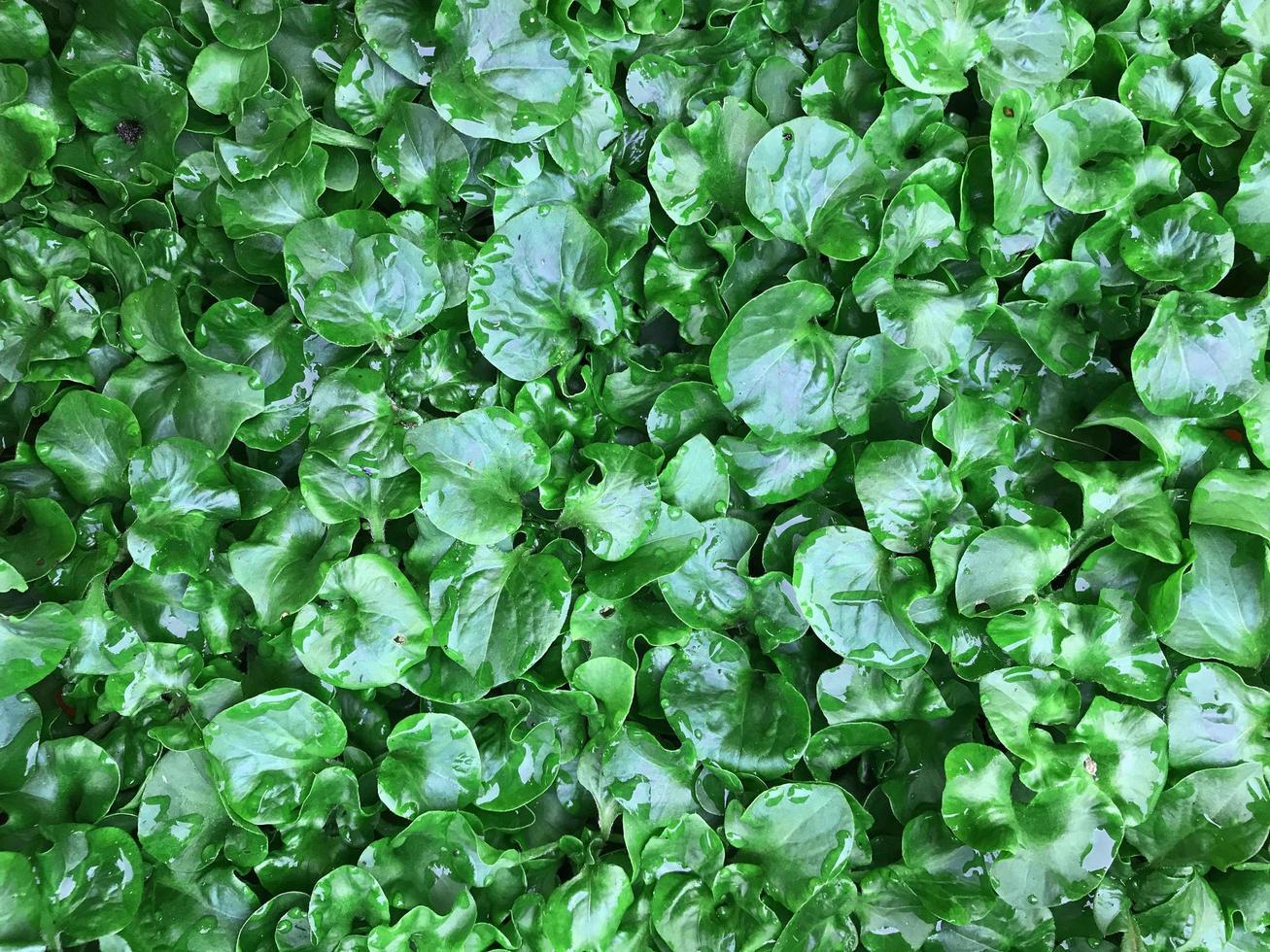 pioggia sulle foglie foto