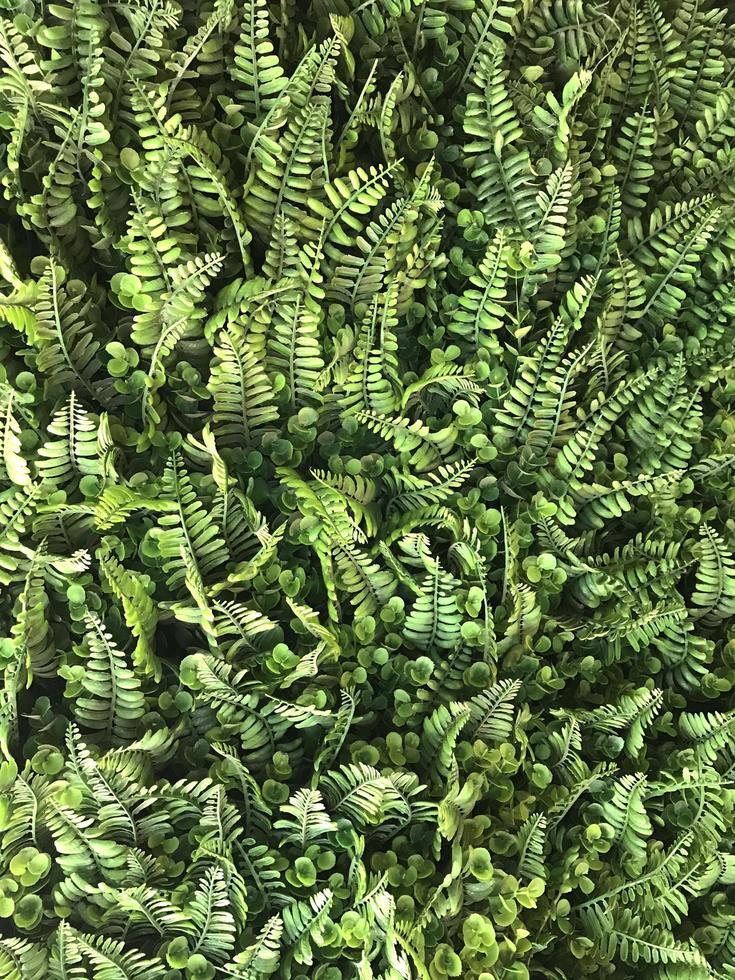 foglie di felce verde foto