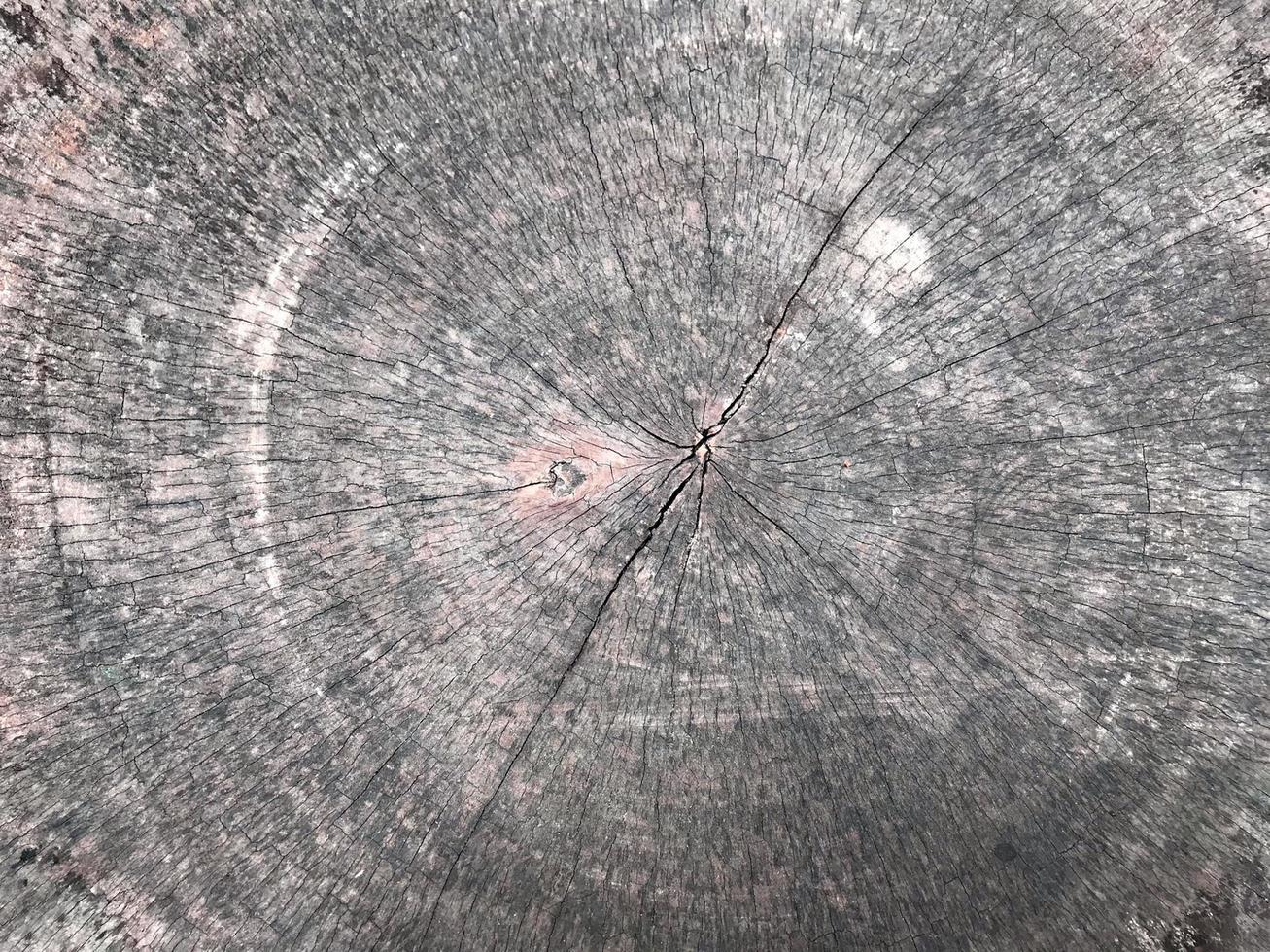 struttura del ceppo di legno foto