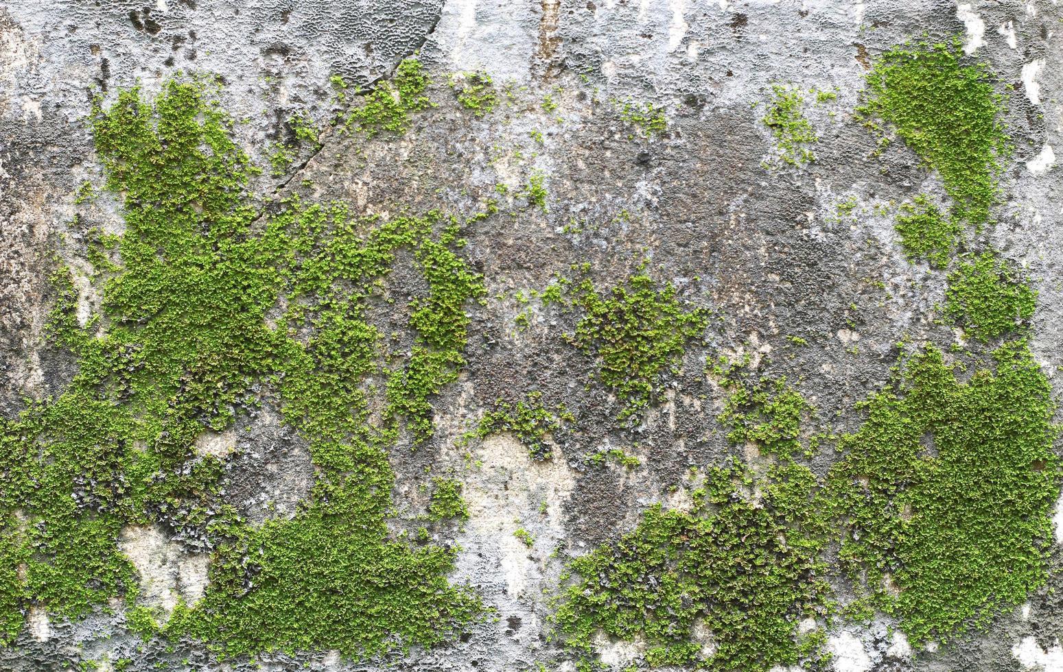 muschio verde su roccia foto