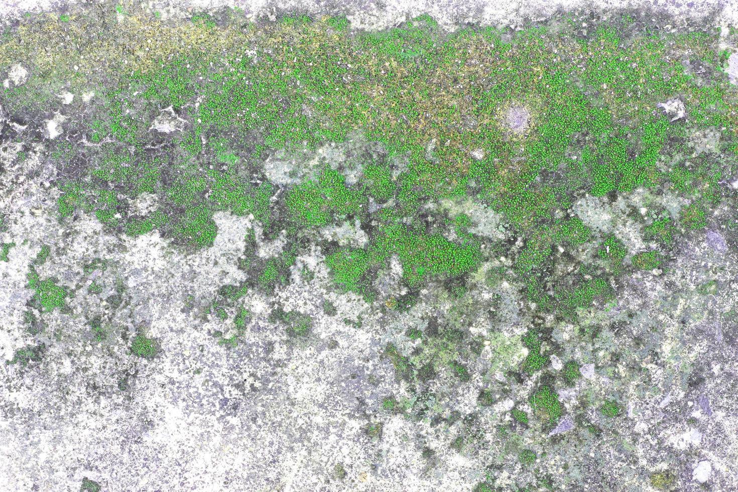 muschio sulla superficie della roccia foto