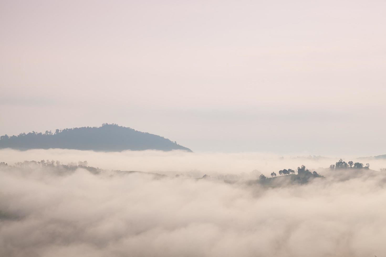 montagne e foreste coperte di nebbia foto