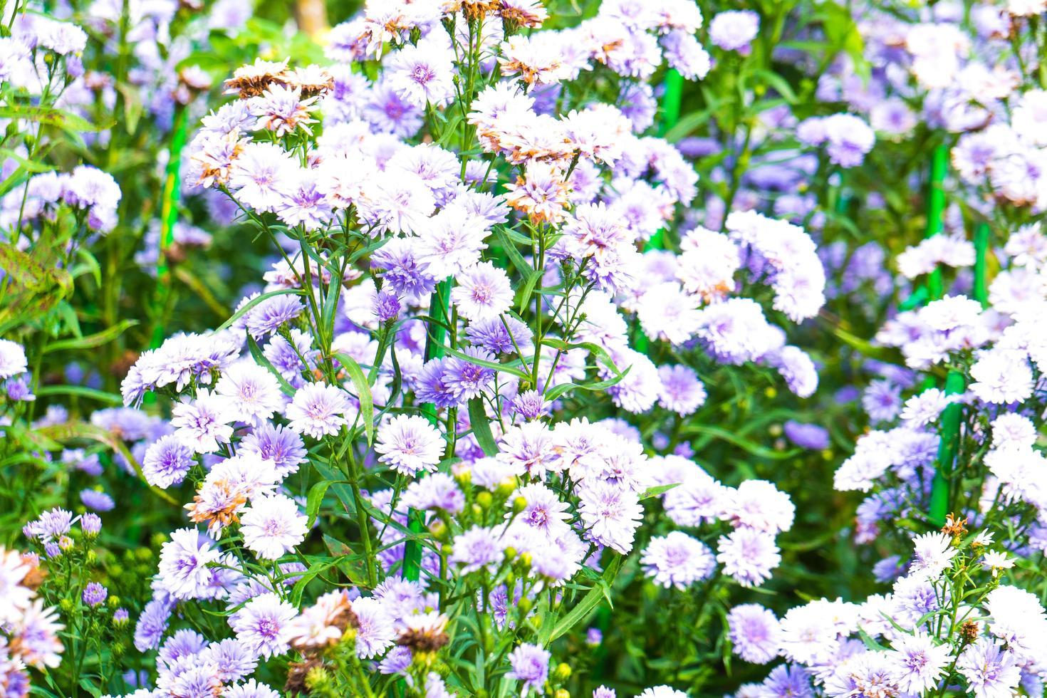 fiori bianchi e blu nel parco foto