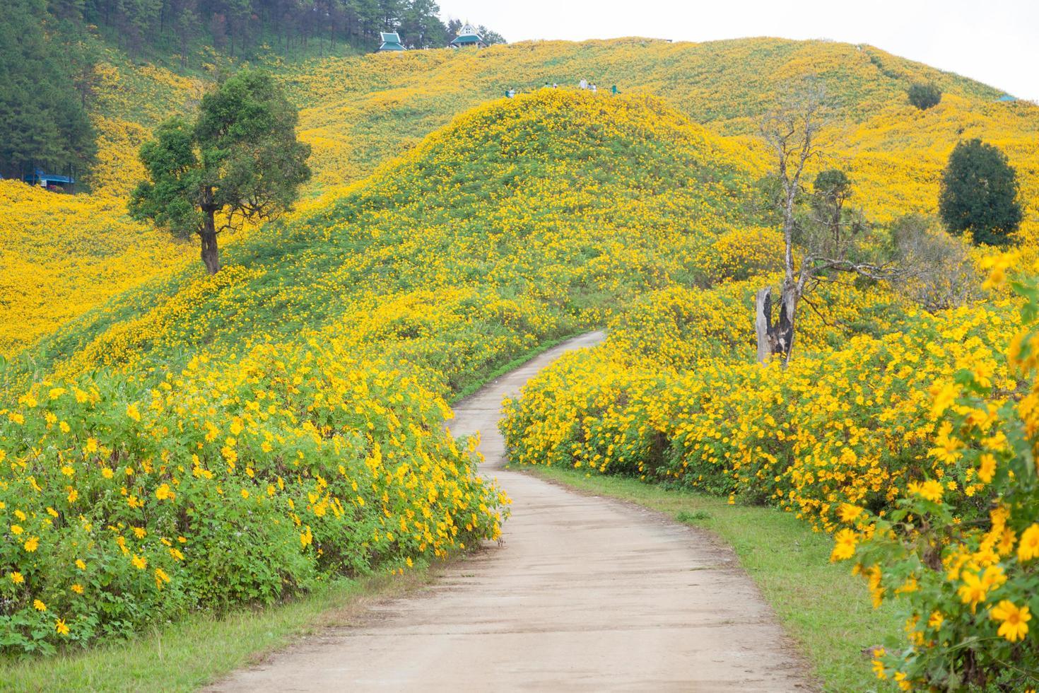 strada tra i campi di fiori foto