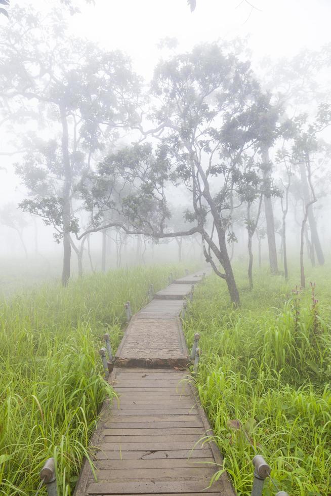 passerella in legno nella foresta foto
