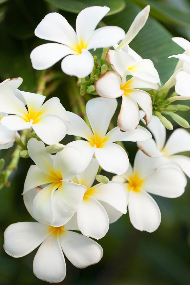 fiori bianchi su un albero foto