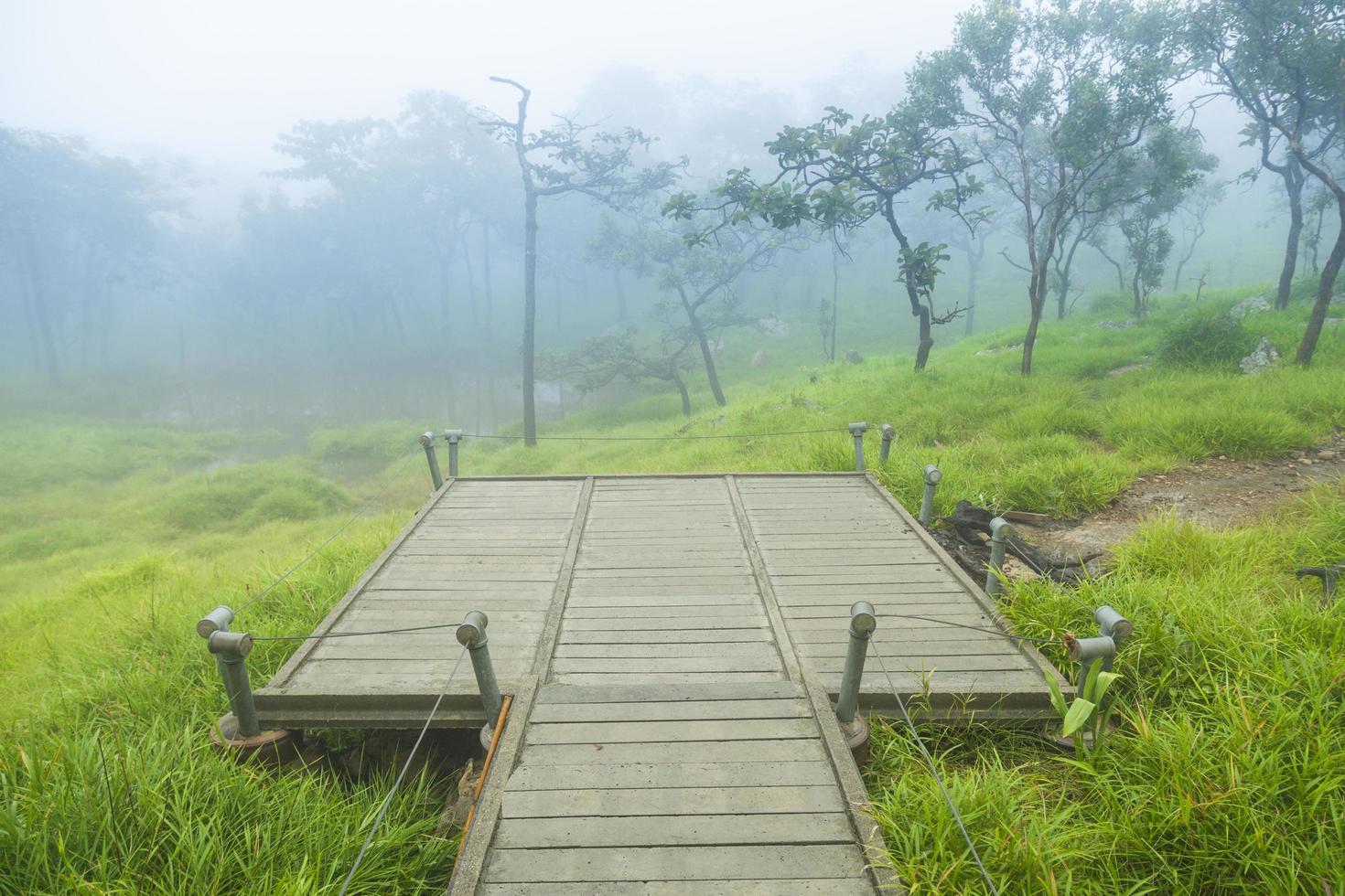 punto di vista nella foresta foto