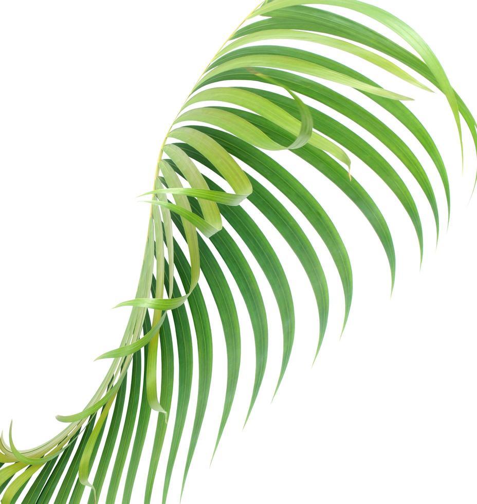foglia tropicale isolato su bianco foto