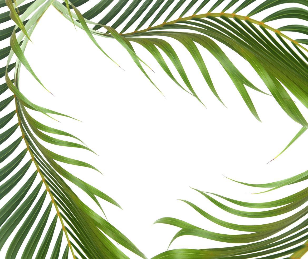 foglie verdi con copia spazio su bianco foto