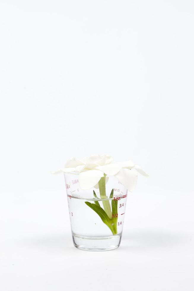 fiore in un bicchiere su sfondo bianco foto