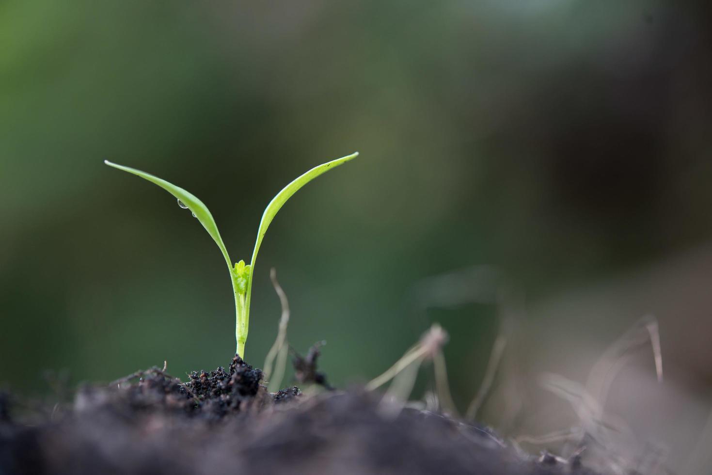 primo piano di un giovane germoglio in crescita foto