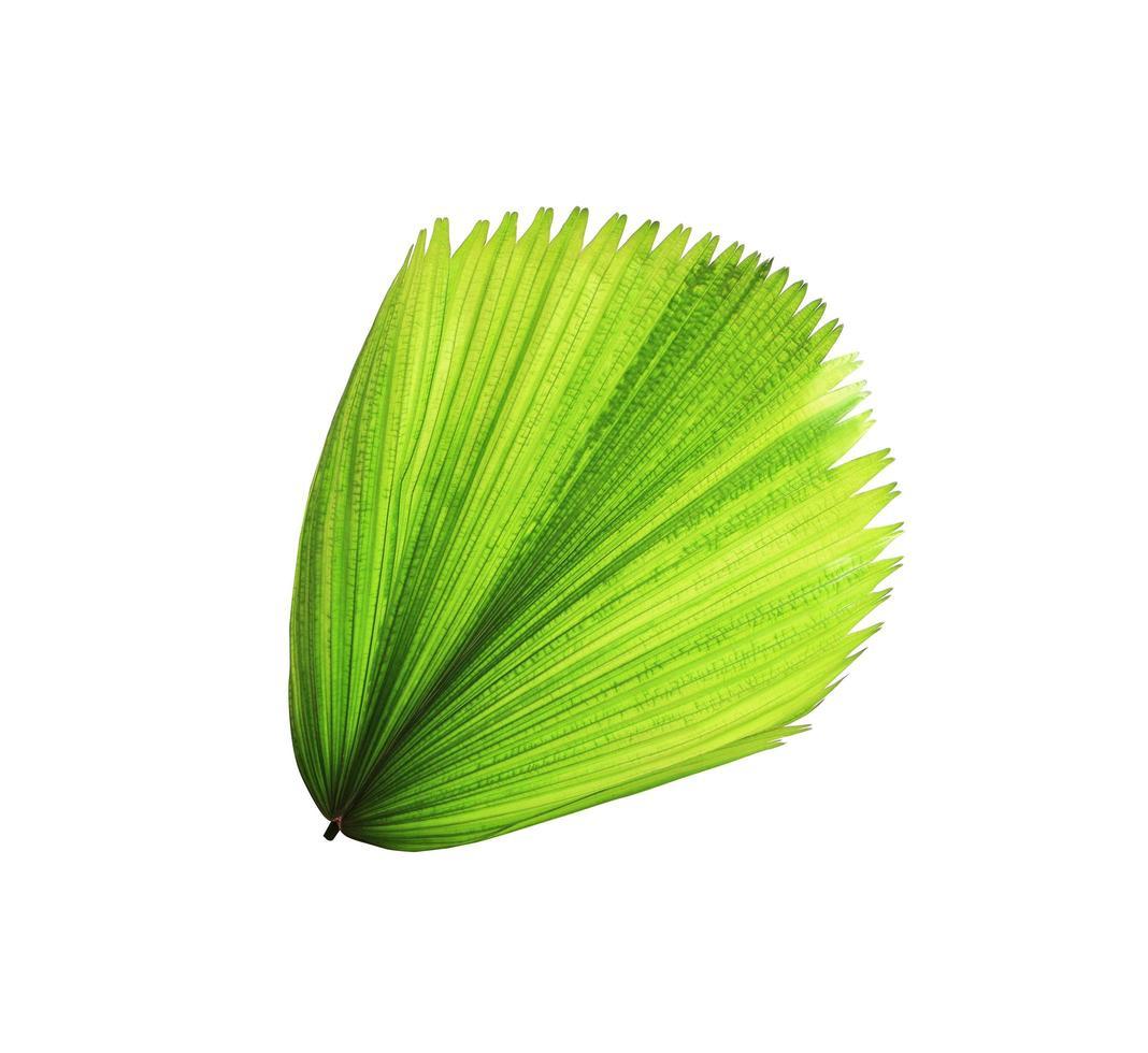 foglia di palma verde che soffia foto