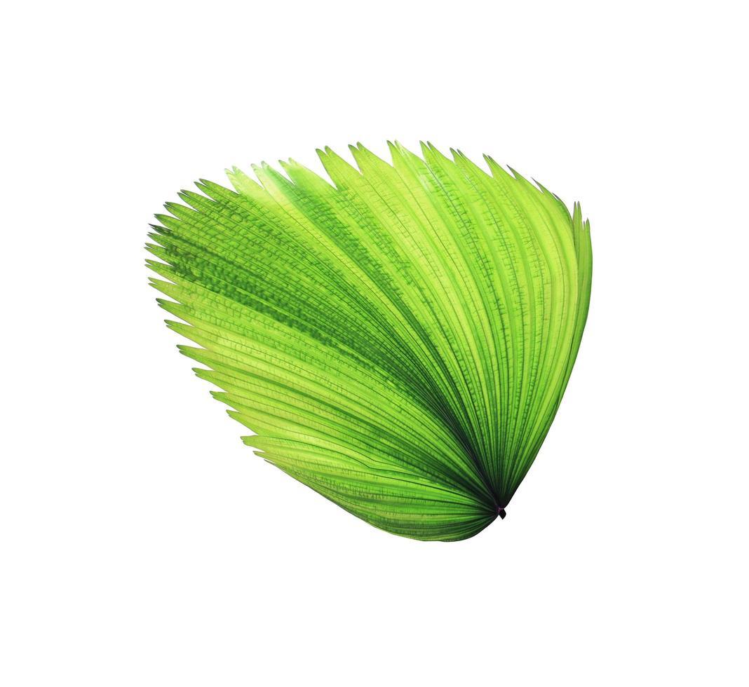 foglia verde tropicale che soffia foto