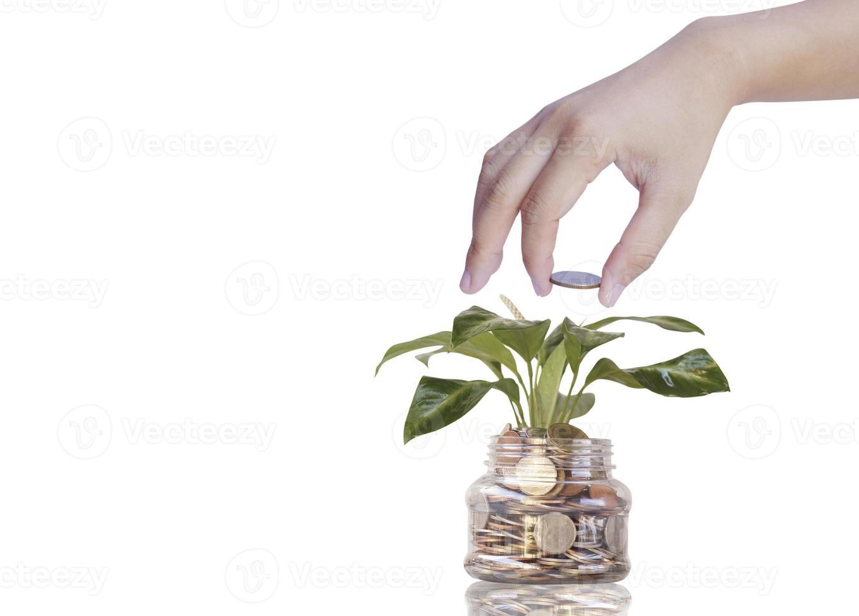 persona che aggiunge monete a una banca di vetro con la pianta che cresce foto