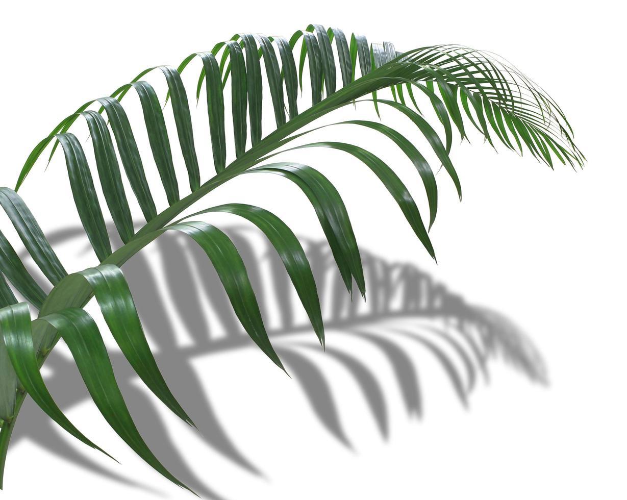 foglia tropicale e ombra foto