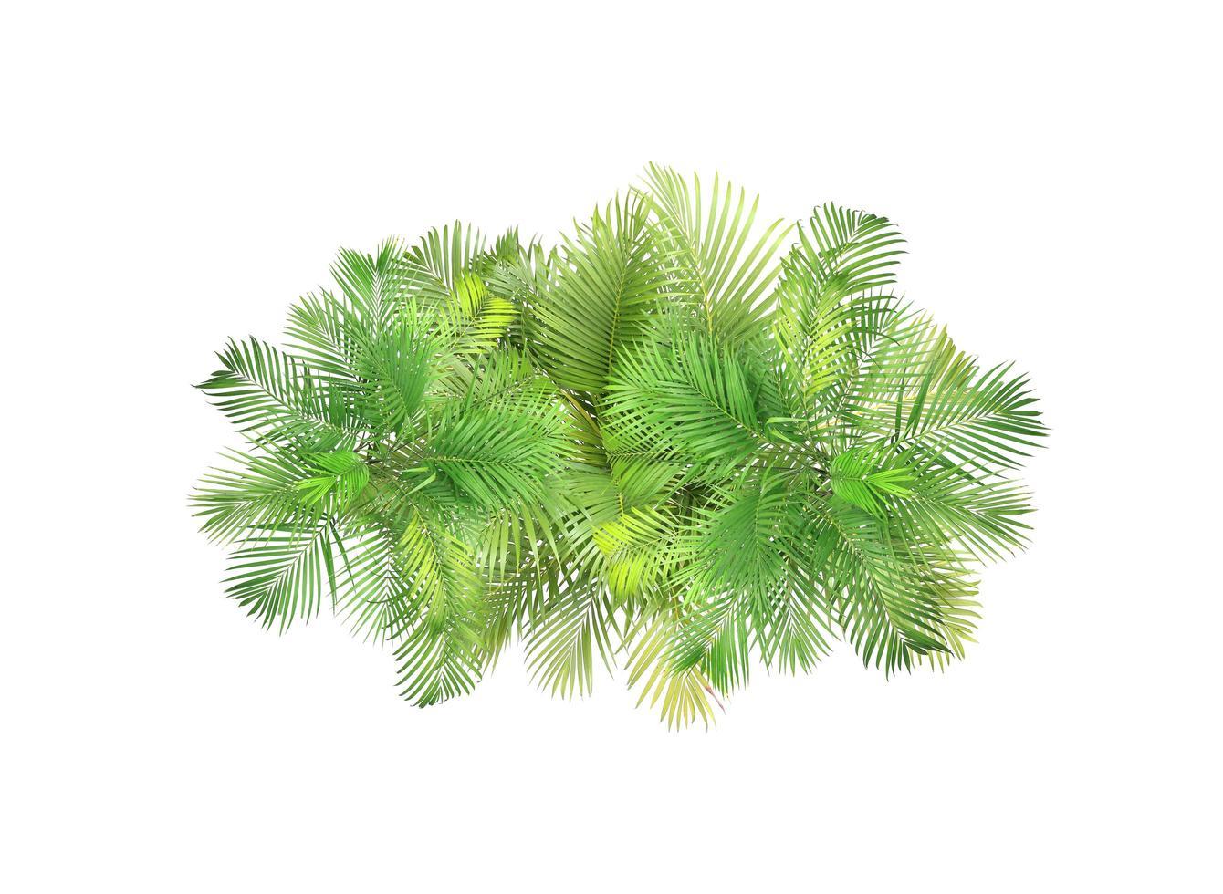 vista dall'alto di foglie di palma foto