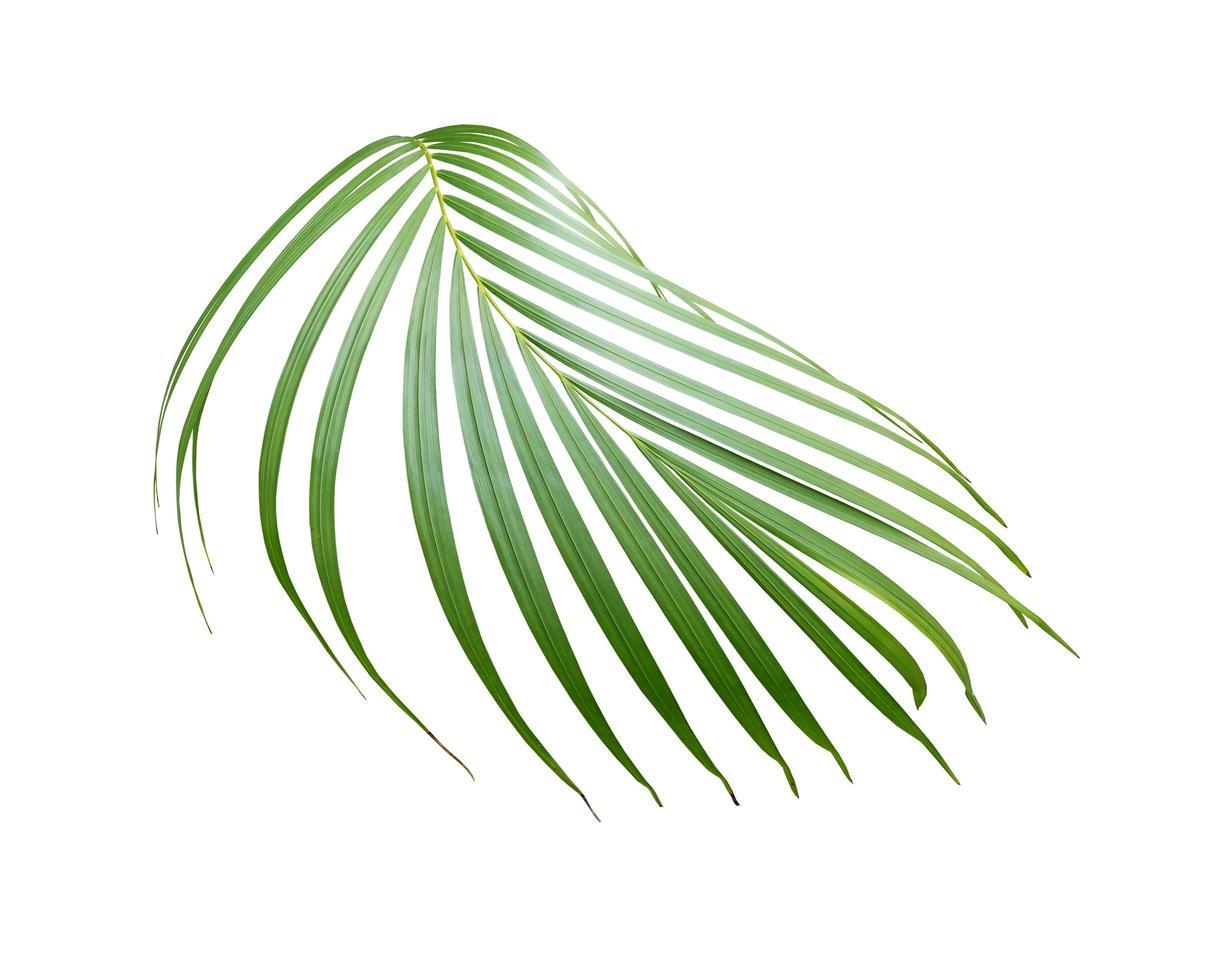 ramo di foglie di palma foto