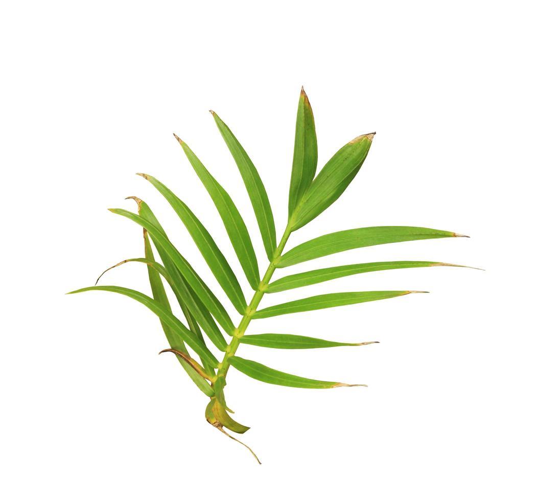 ramo di foglie con un po 'di marrone foto