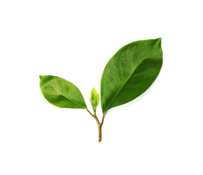 gruppo di foglie foto