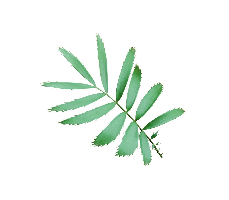 foglie di rattan verde foto