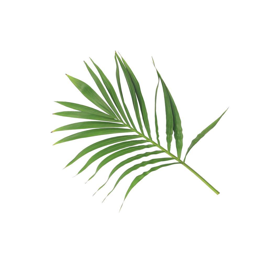 lussureggiante ramo di foglie tropicali foto