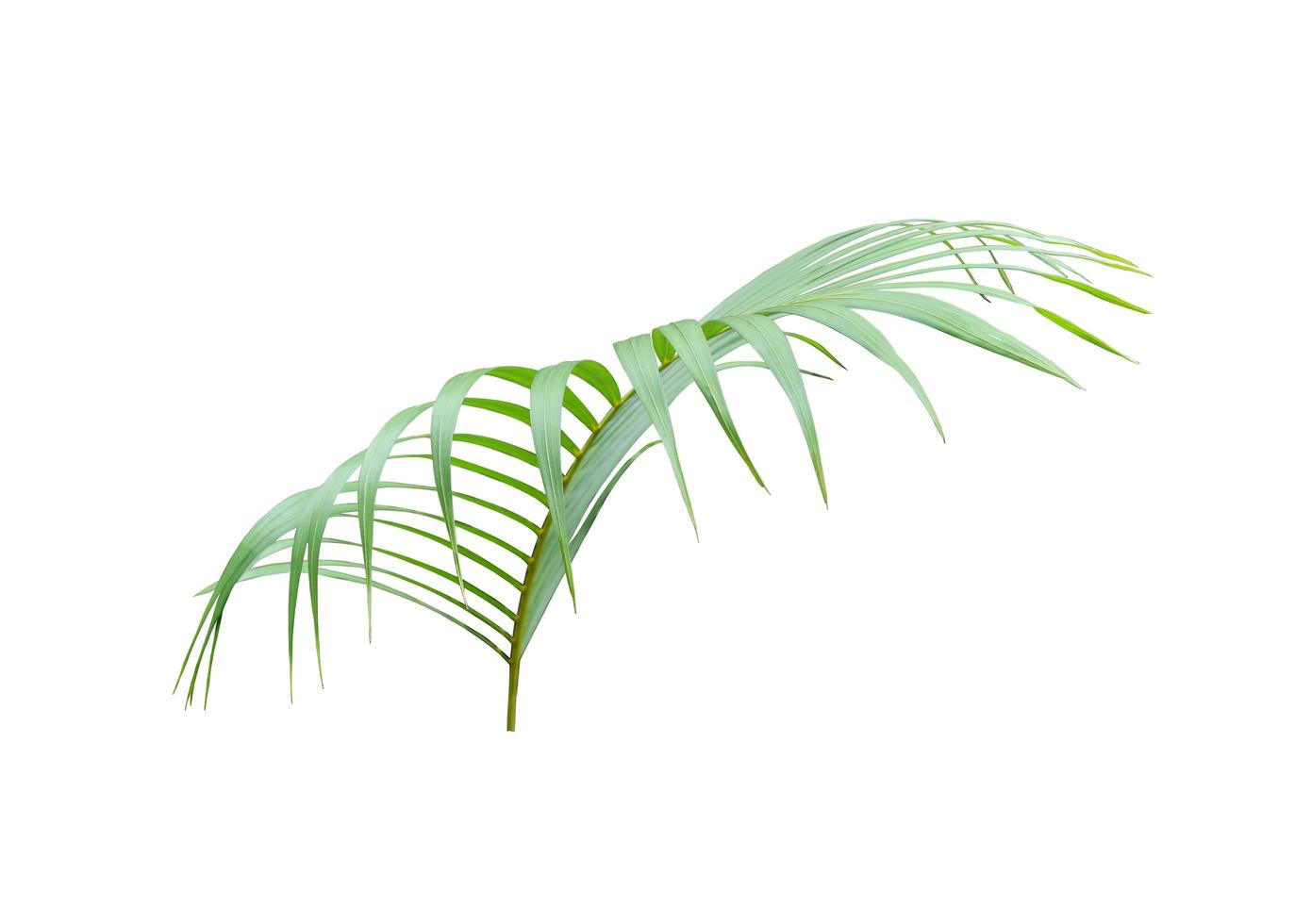 foglia di palma verde brillante lussureggiante foto