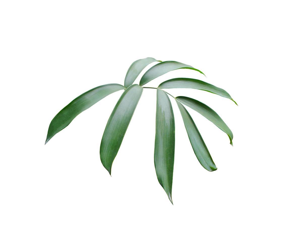 insieme verde lussureggiante di foglie foto