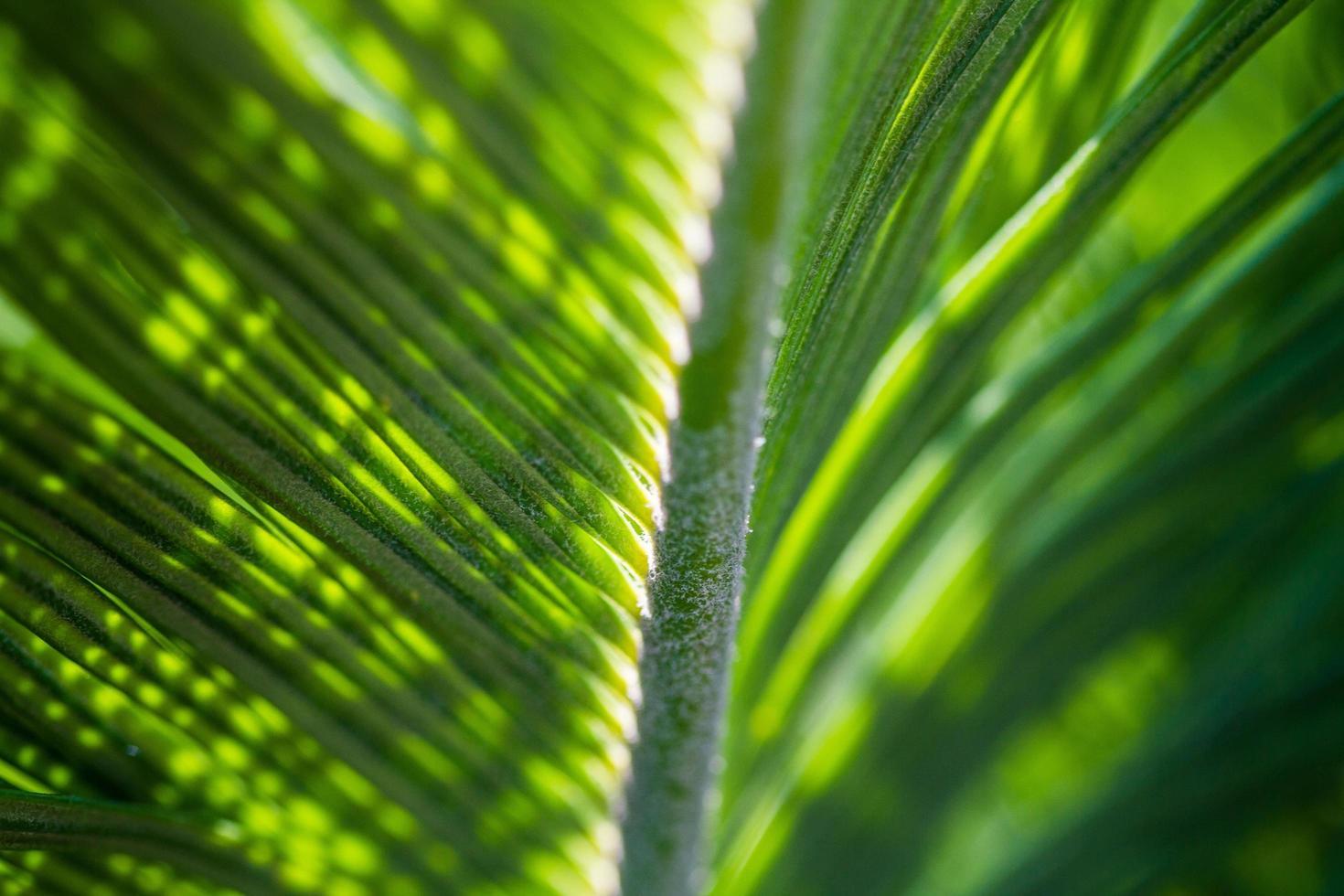 foglie di palma con luce che passa foto
