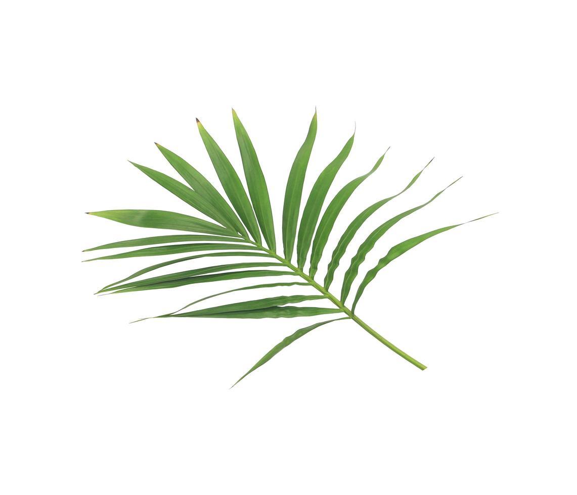 gruppo di foglie verdi su un ramo foto
