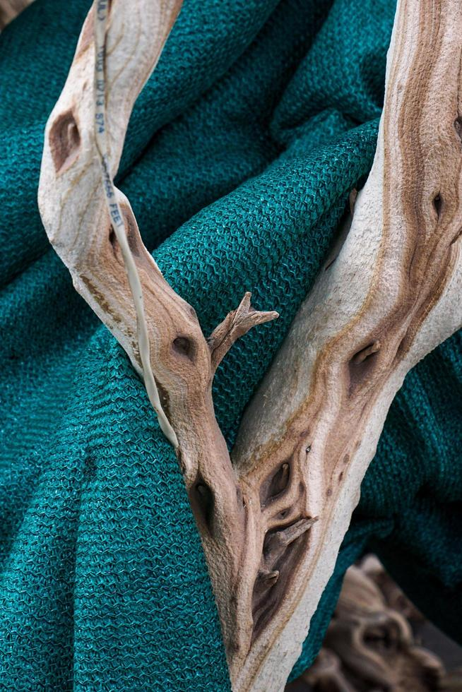 ramo su una coperta foto