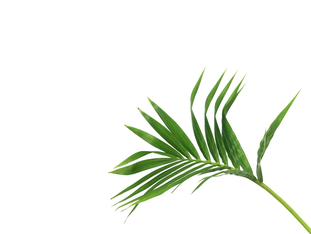 ramo verde intenso con copia spazio foto