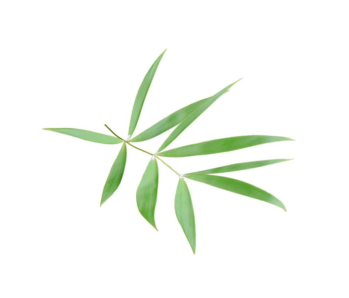foglie di bambù su bianco foto