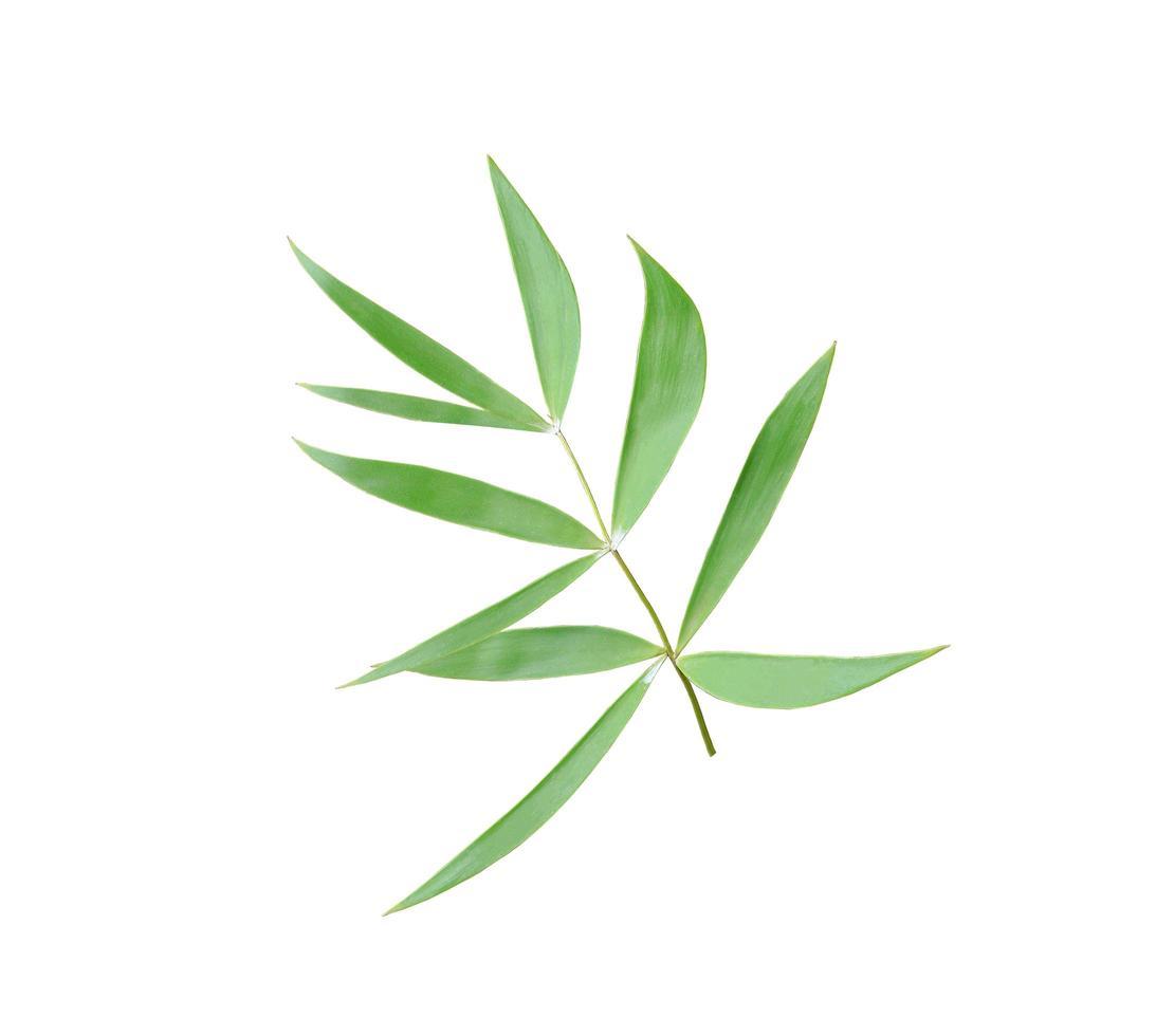 foglie di bambù verde foto