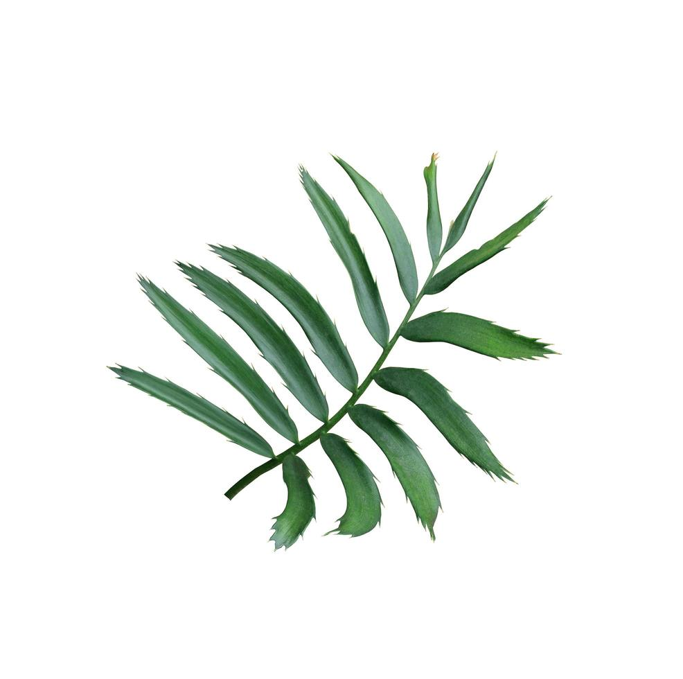 lussureggianti foglie lunghe su un ramo foto