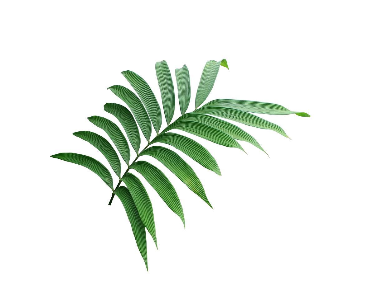 foglie tropicali lussureggianti verdi foto