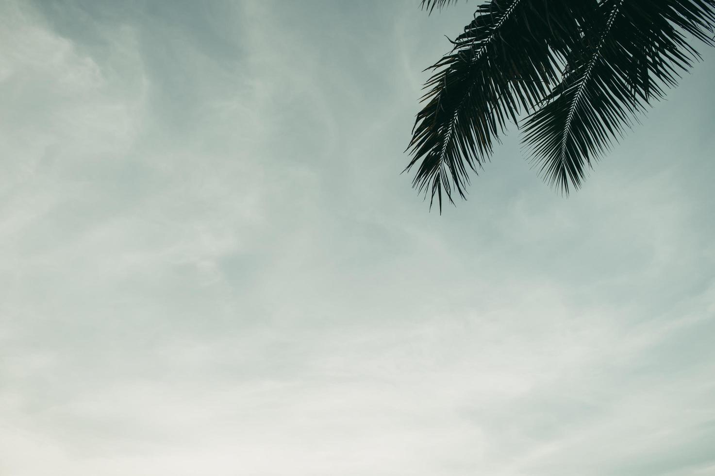giardini di alberi di cocco in thailandia foto