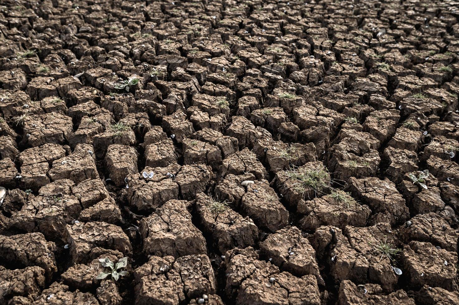 terra arida con terreno asciutto e screpolato foto